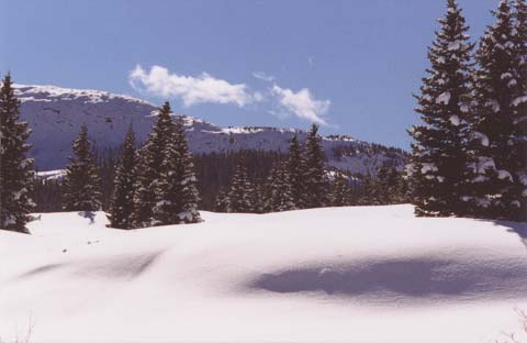 Fresh Snow on Molas Pass